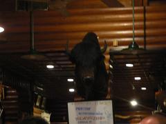 カントリーハウスの牛