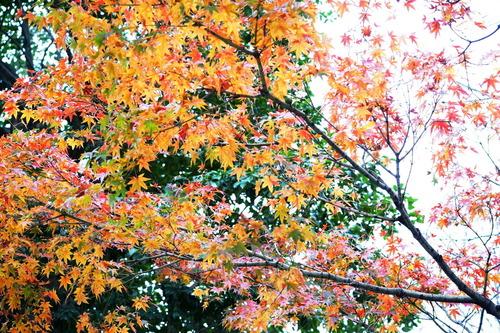 外国人の人探しとマナー(博多駅前通りを通行)|探偵事件簿-福岡