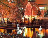 警固公園のクリスマスイルミネーション