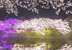花見と言う名の浮気のタイミングと隠れ蓑| 探偵事件簿-福岡