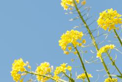 春の気配と浮気調査| 探偵事件簿-福岡
