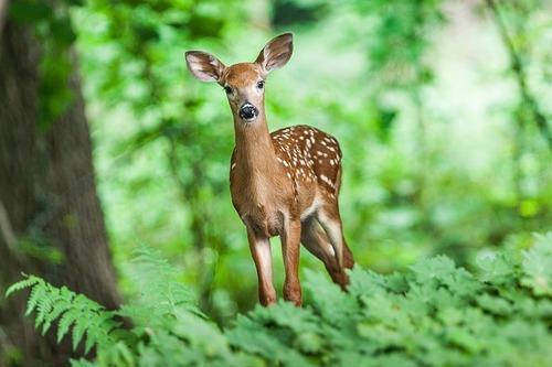 wildlife-1367217_640