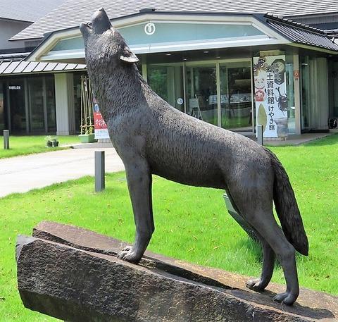 東京の日本狼