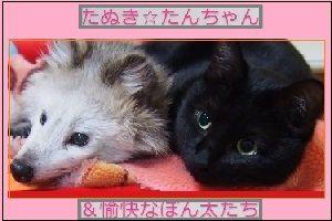 たんちゃんママのブログ
