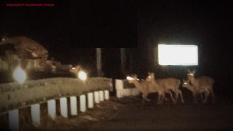 1鹿のジャンプ力
