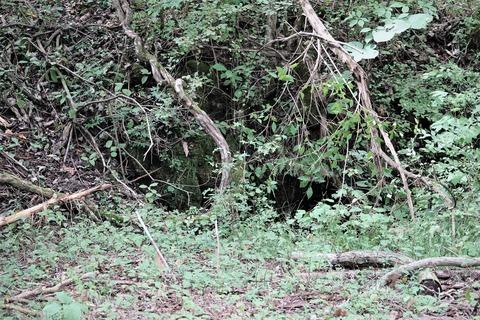 イノシシの巣穴