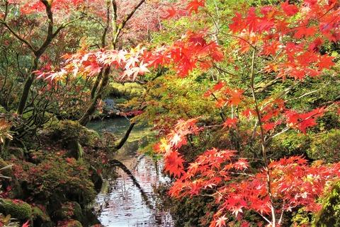 4日光の紅葉