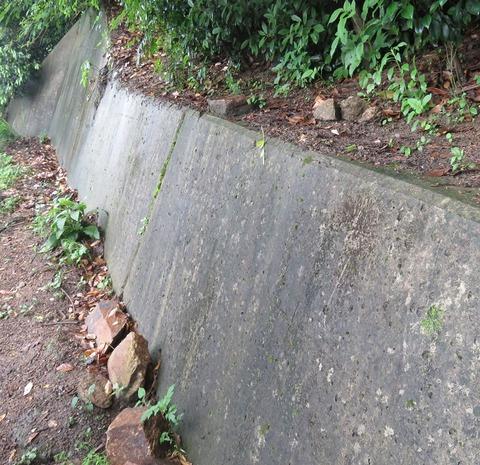 たんちゃん山のお参り
