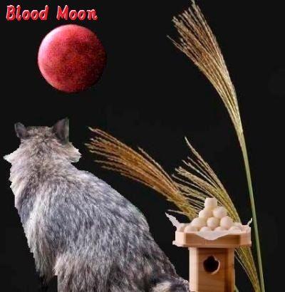 お月見したぬき