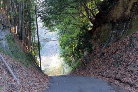 01自然路散策