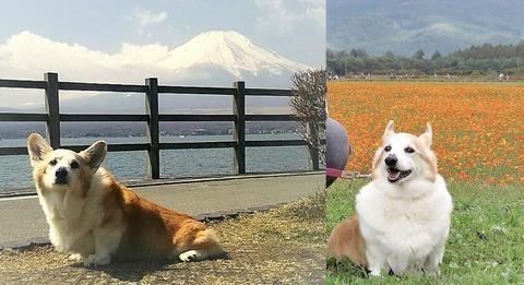 バディ富士山