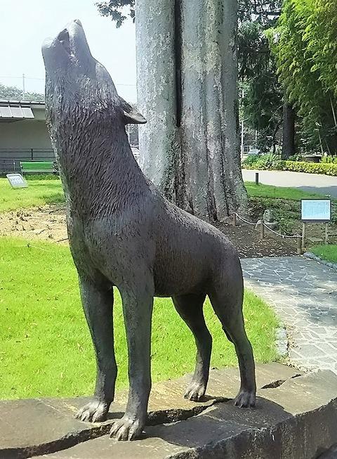 東京のニホンオオカミ