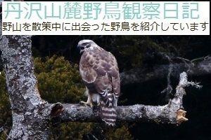 丹沢山麓野鳥観察日記