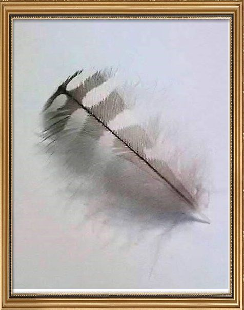 ヤマセミの羽根