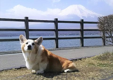 1 yamanakako