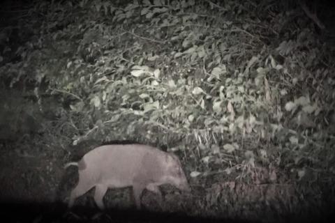 🐗おまけ猪