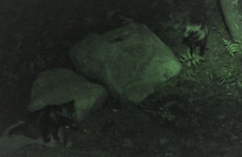 パナソニ赤外線タヌ