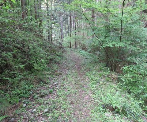 01森林道