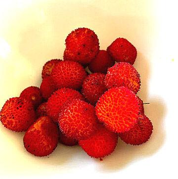 arbre de fraises2