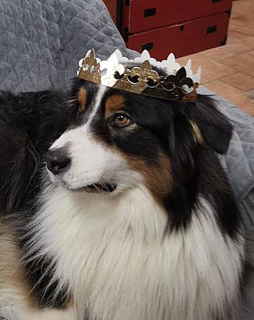 roi Luka