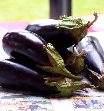 aubergines1