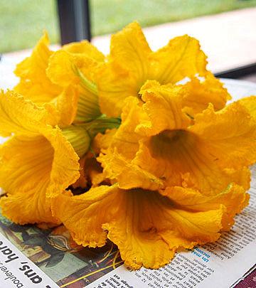fleur de potiron