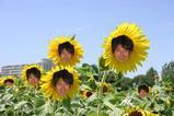咲いた。由沼の花