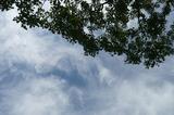 見上げる空、白い雲。