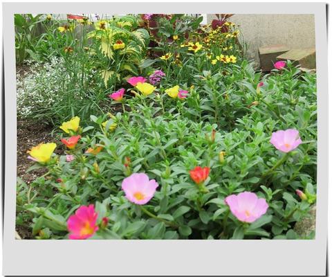 夏に元気な花たち