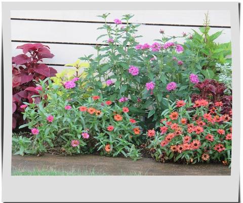 夏色の花壇
