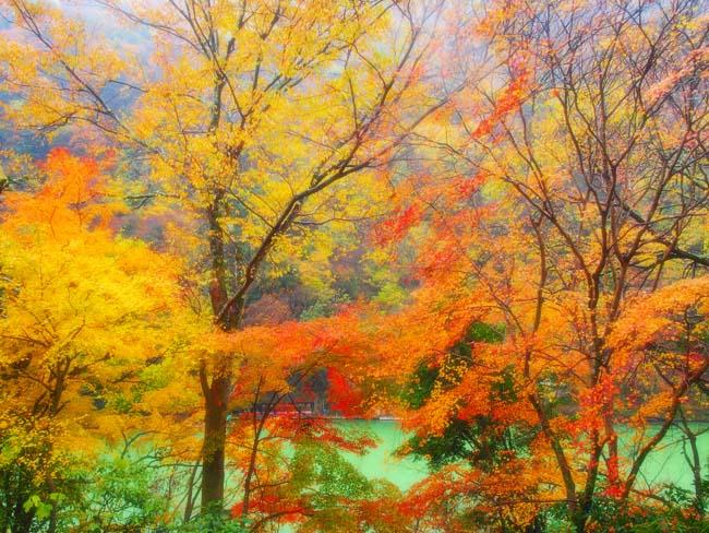 京都・嵐山の紅葉-10/OM-D