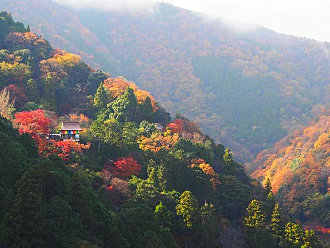 京都・嵐山の紅葉-5/OM-D