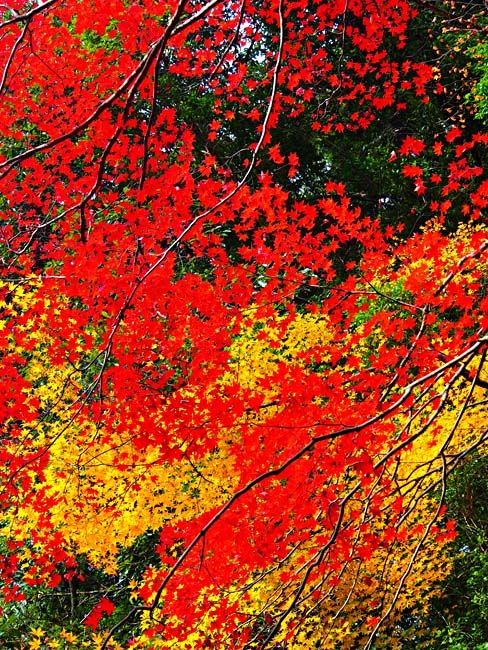 京都・嵐山の紅葉-4/OM-D