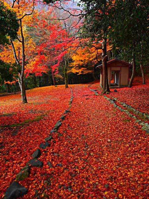 京都・嵐山の紅葉-7/OM-D