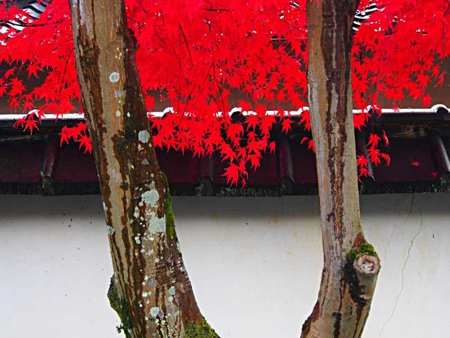 京都・嵐山の紅葉-11/OM-D