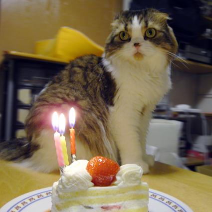 誕生日2008