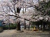 20060403桜
