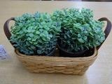 20110410造花