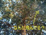 f8358d4f.JPG