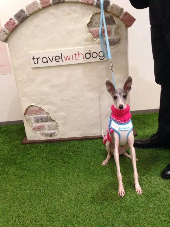 travel with dogさんにお邪魔してきました。