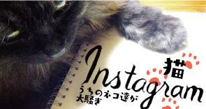 我が家のねこたち_instagram