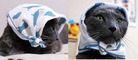 青猫ハンカチ