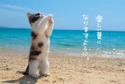「夏 画像ネコ」の検索結果   Yahoo 検索(画像)