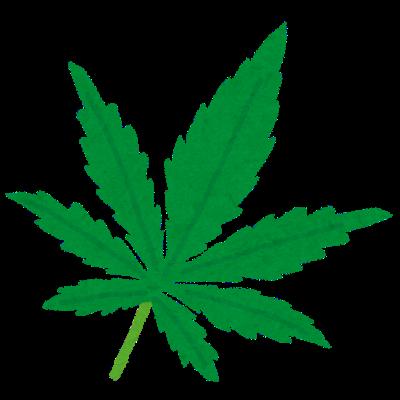 【朗報】大麻さん、やっぱり害があった模様