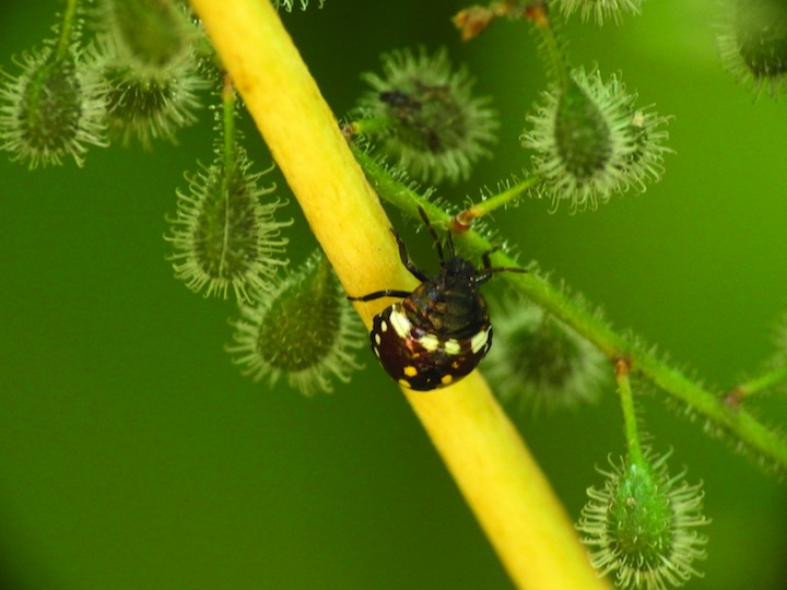 世界で昆虫が急速に減少していることがわかった──プエルトリコで約40年間で60分の1に[10/23]