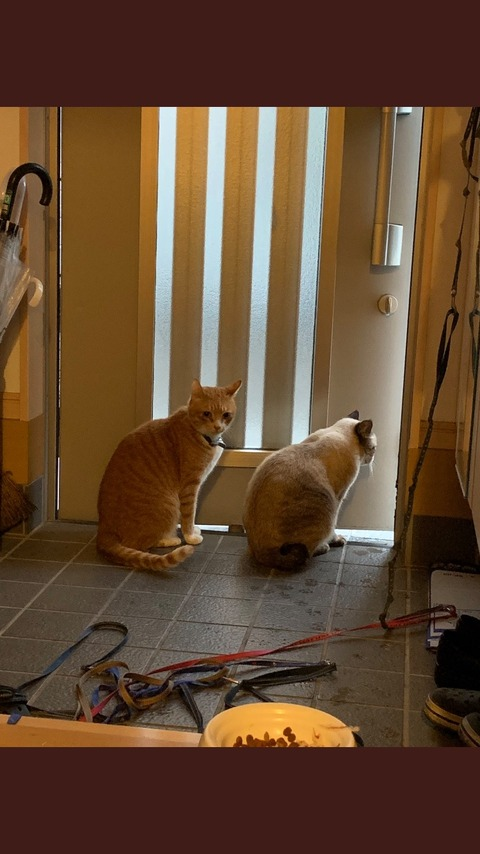 のら猫「台風やばいンゴ…」ワイの飼いネッコ「ほなワイの家で雨宿りしてくか?」