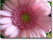 pink-flower-11_edited-1