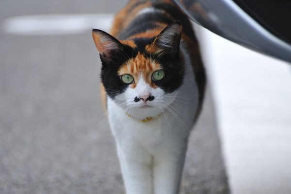 一匹の猫(京都にて)