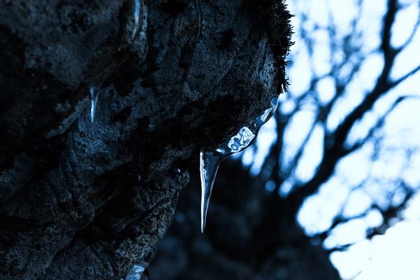 氷点下の朝