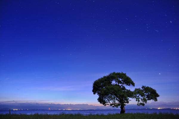スペードの木
